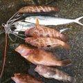 satさんの福井県南条郡での釣果写真