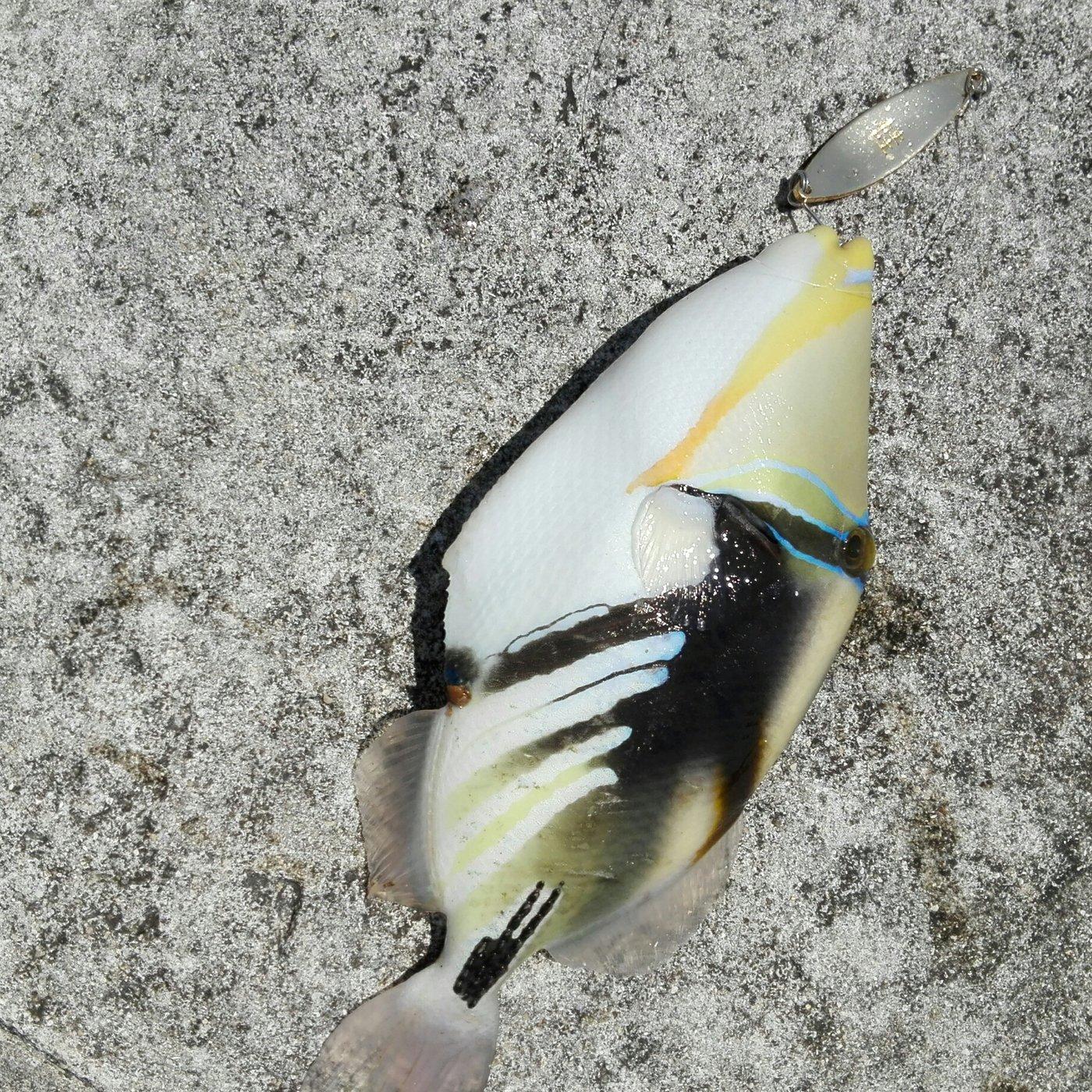 tk828さんの投稿画像,写っている魚は