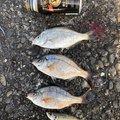 かねやんさんの千葉県木更津市での釣果写真