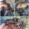 とくさくさんの鹿児島県出水郡でのカサゴの釣果写真