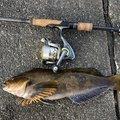 あぶっちさんの北海道白老郡での釣果写真