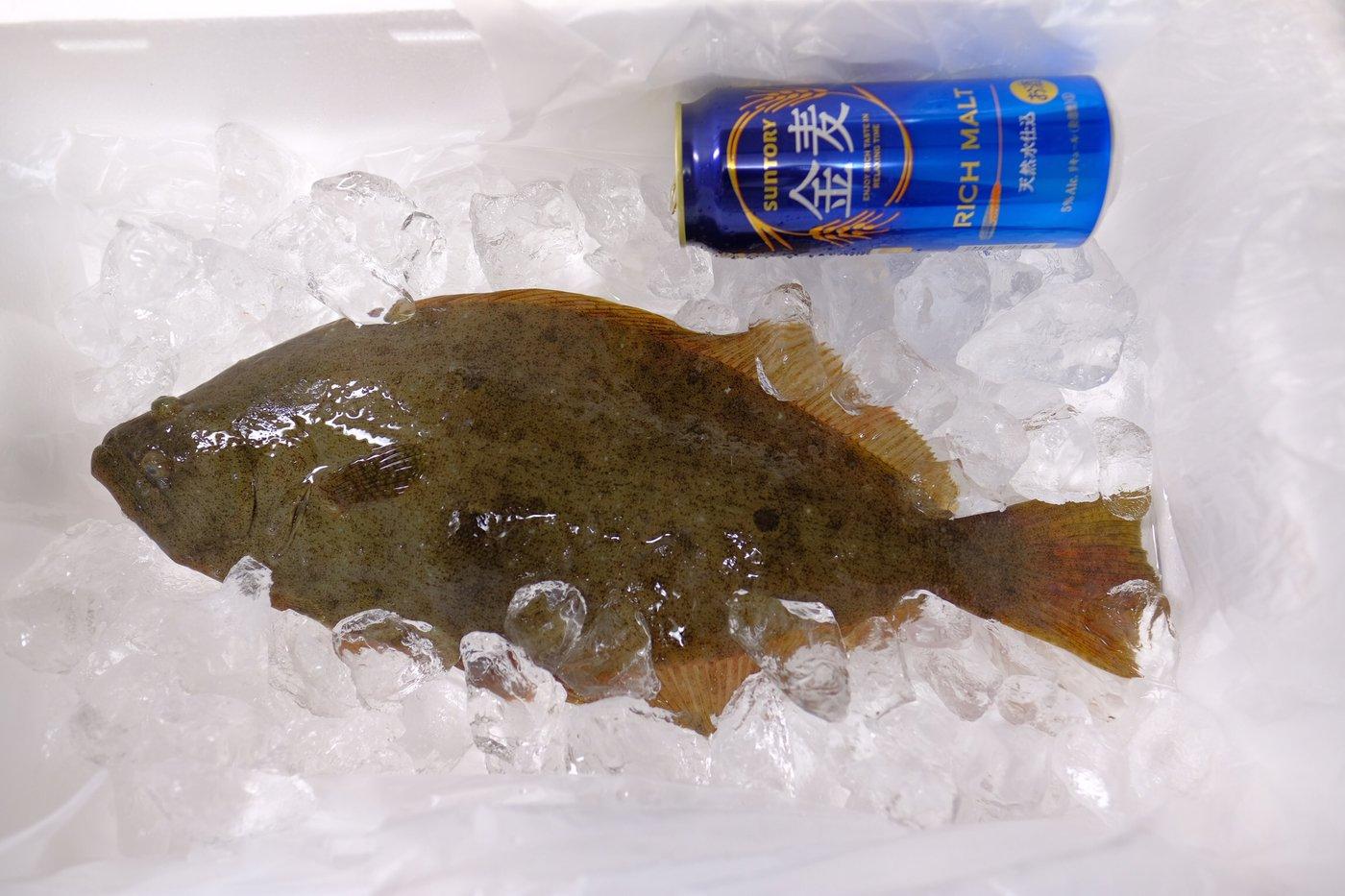 mmtrsnさんの投稿画像,写っている魚はヒラメ