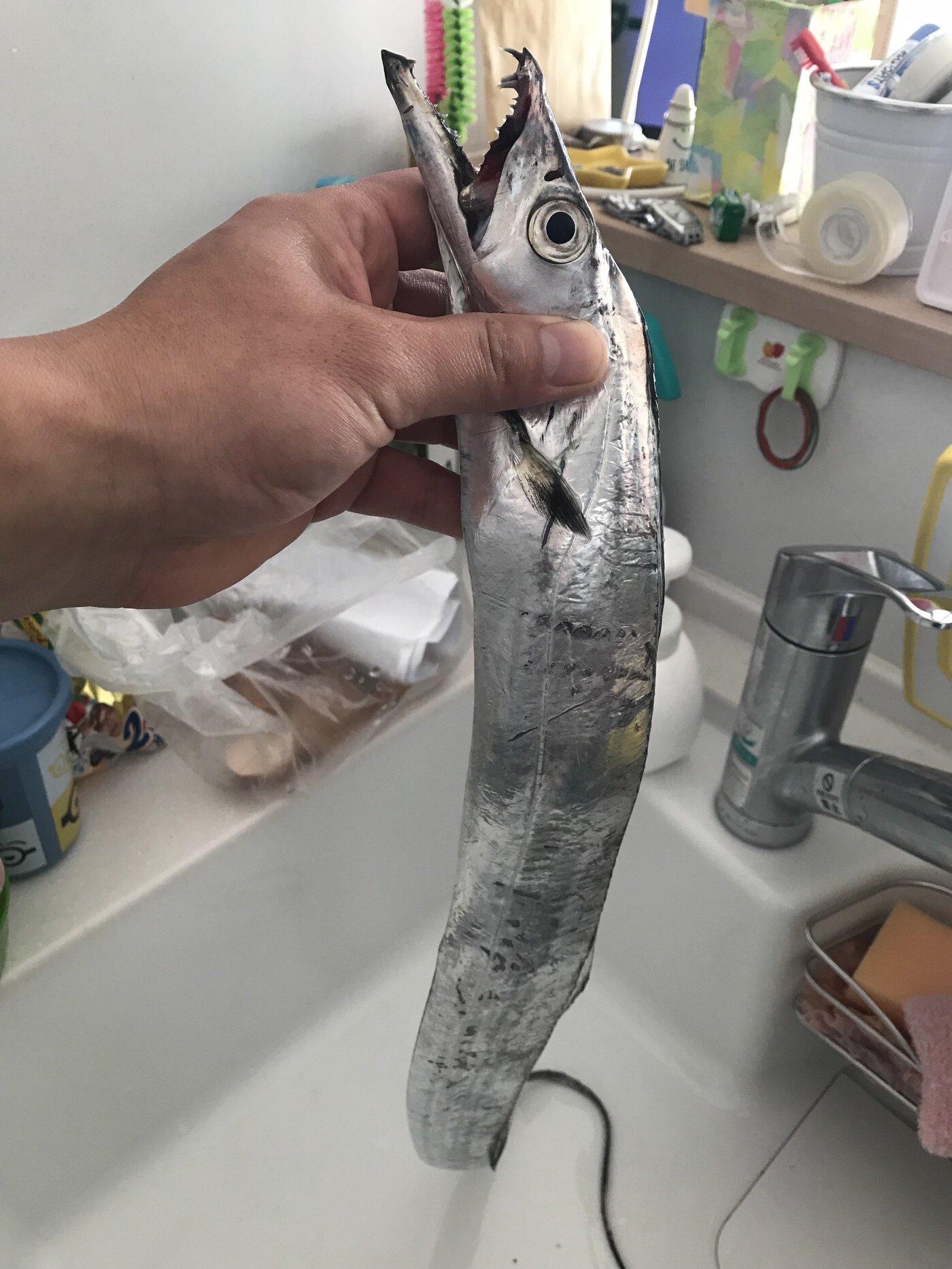 ひろさんの投稿画像,写っている魚はタチウオ