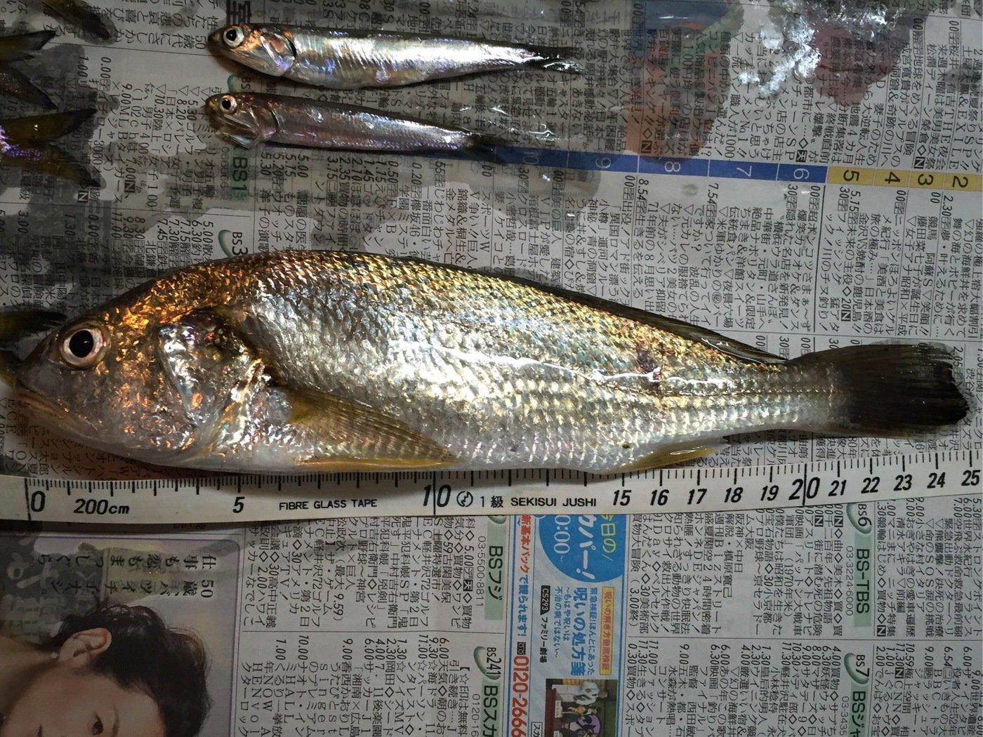 ミツルさんの投稿画像,写っている魚はイシモチ