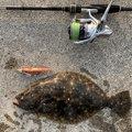 luckyさんの三重県四日市市でのヒラメの釣果写真