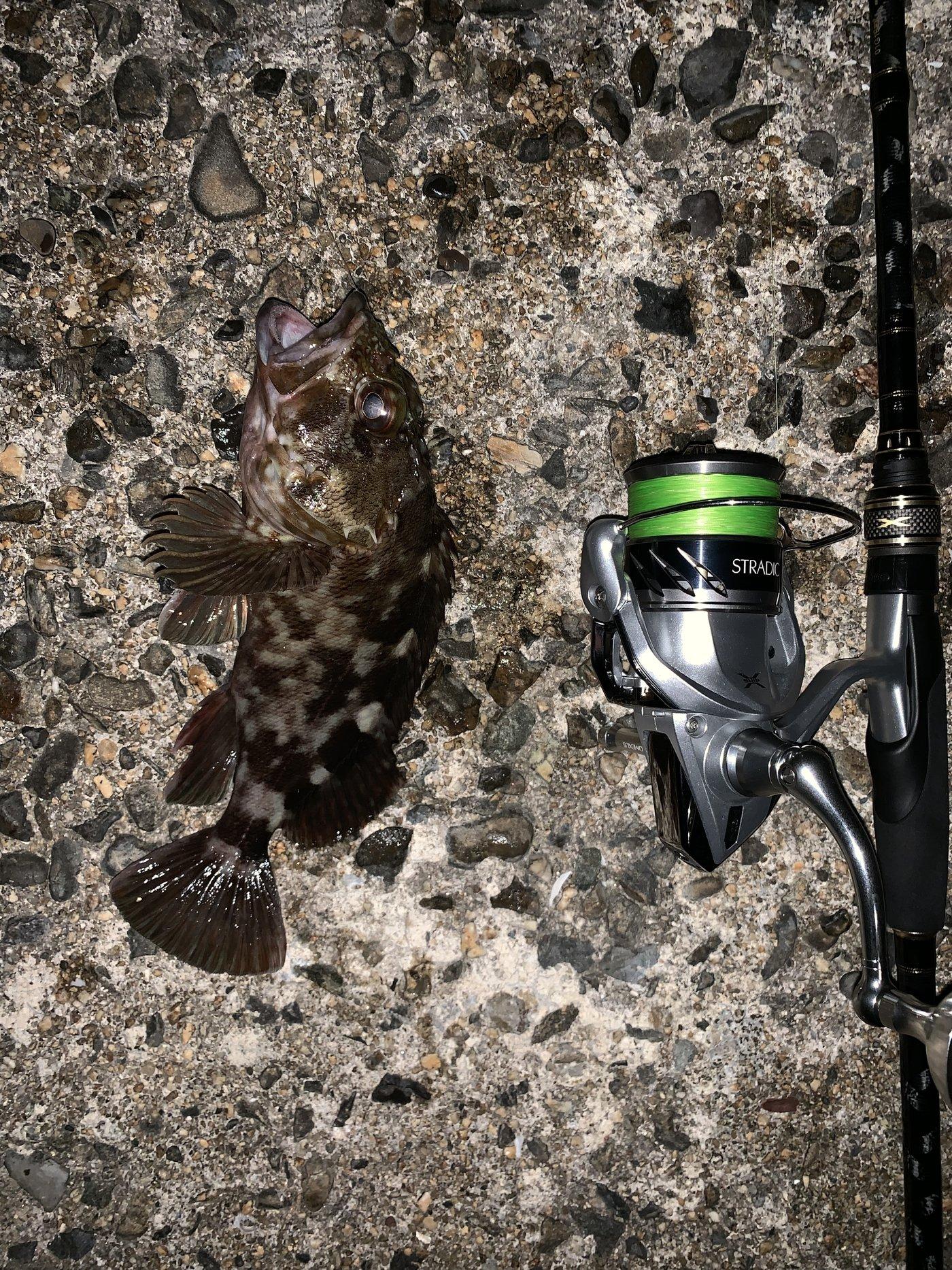 luckyさんの投稿画像,写っている魚はカサゴ,マサバ,タケノコメバル,メバル