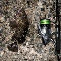 luckyさんの三重県四日市市でのタケノコメバルの釣果写真