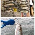 シャチさんの福岡県福岡市でのコノシロの釣果写真