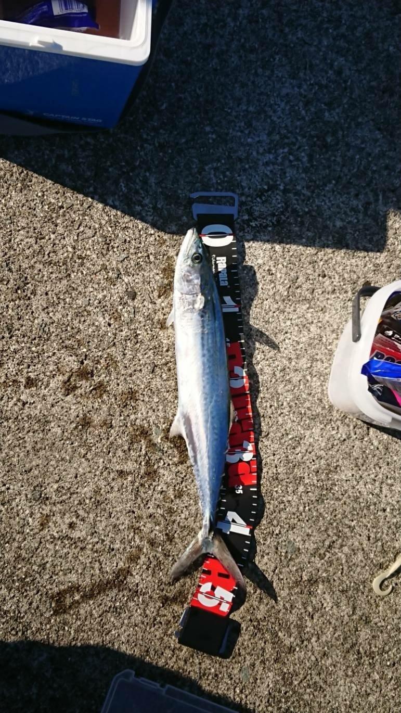 憲司さん@爆釣祈願さんの投稿画像,写っている魚はサワラ
