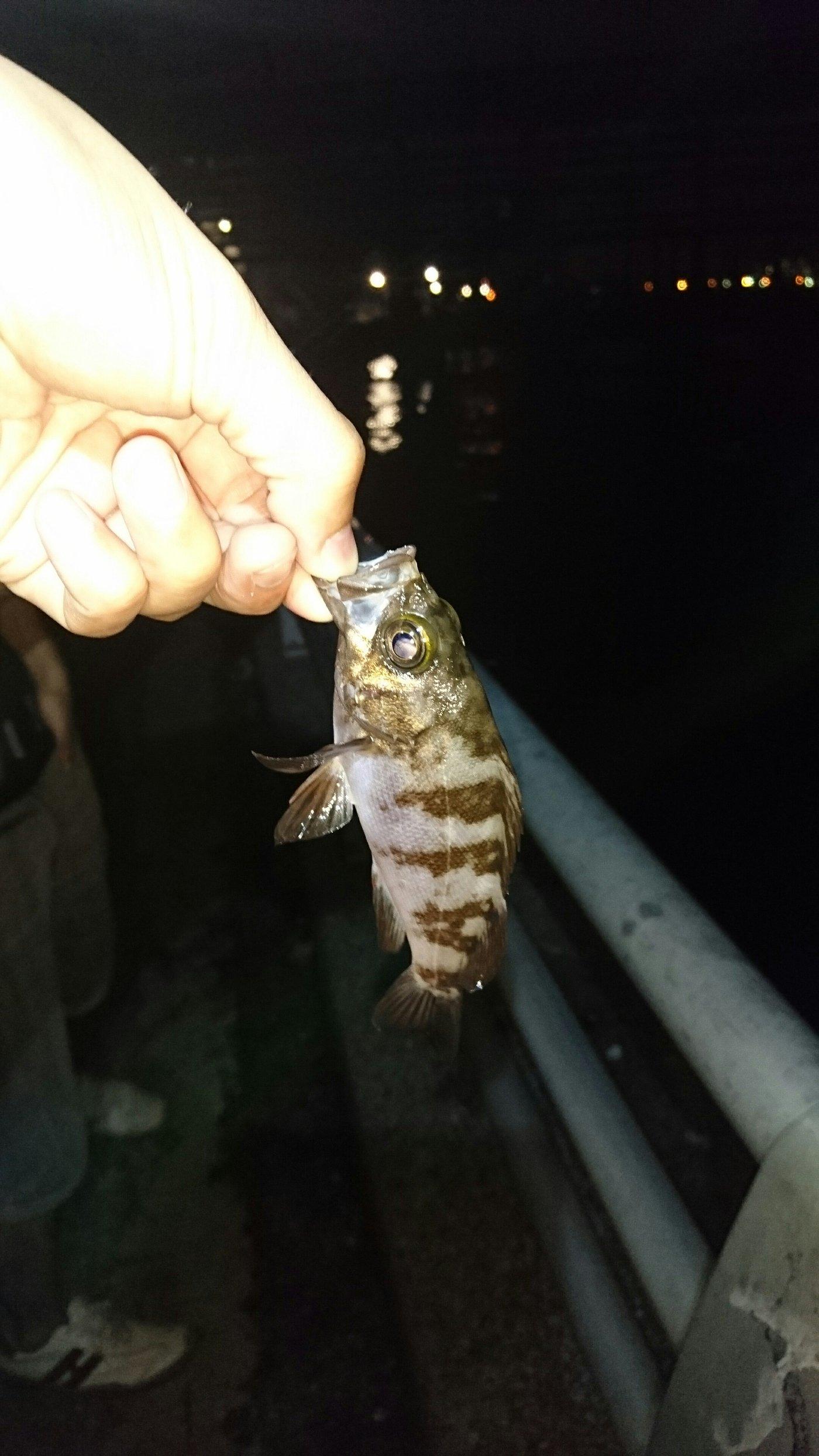 あおさんの投稿画像,写っている魚はメバル