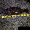 umiyama7さんの秋田県男鹿市での釣果写真