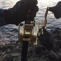 エンドウさんの鹿児島県鹿児島郡での釣果写真