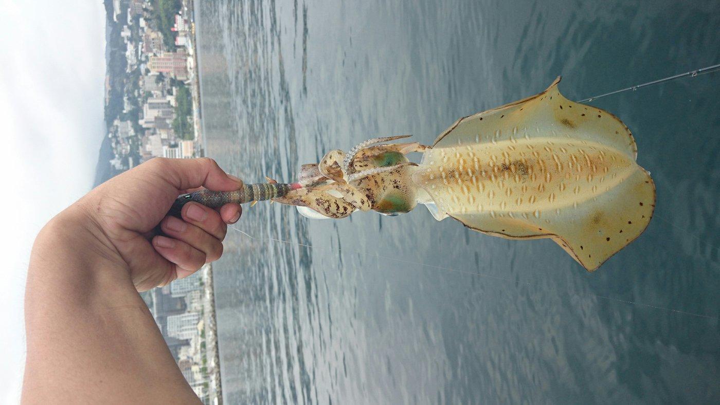 三宿のたこ焼屋さんの投稿画像,写っている魚はアオリイカ