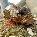 穴釣りさんの和歌山県西牟婁郡での釣果写真