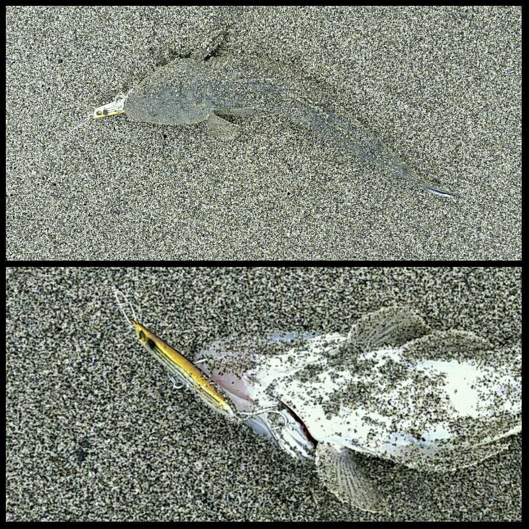 スコーピオンさんの投稿画像,写っている魚はコチ