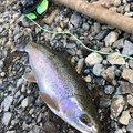 konnoさんの北海道河東郡での釣果写真