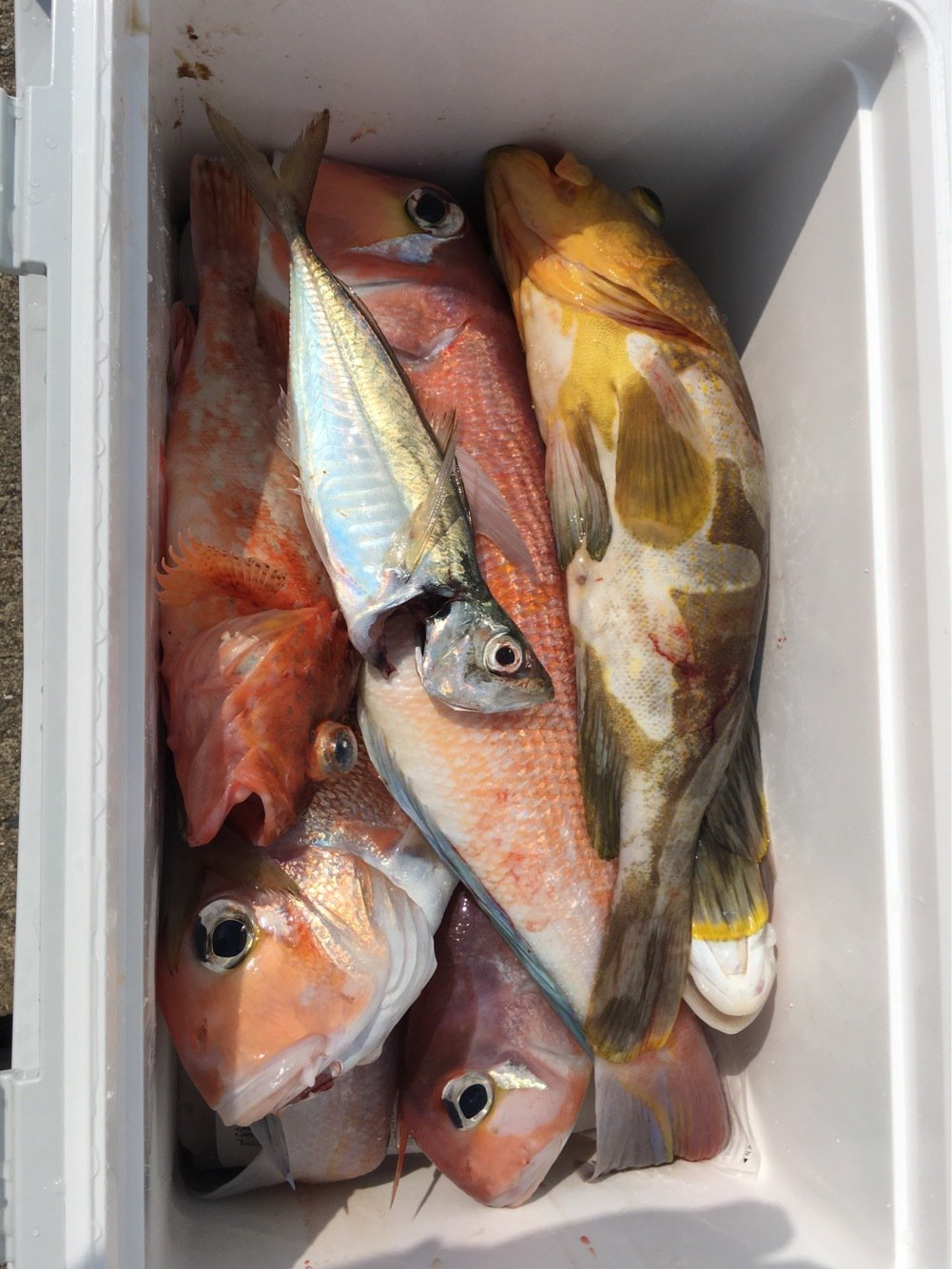 kiyosakuさんの投稿画像,写っている魚はアマダイ