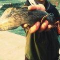 tatsukiさんの宮城県気仙沼市での釣果写真