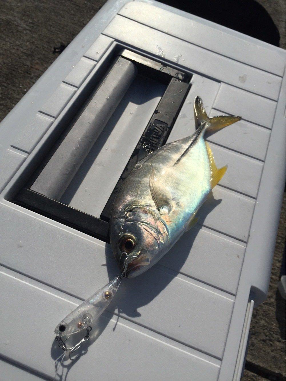 豚骨あんどうさんの投稿画像,写っている魚はギンガメアジ