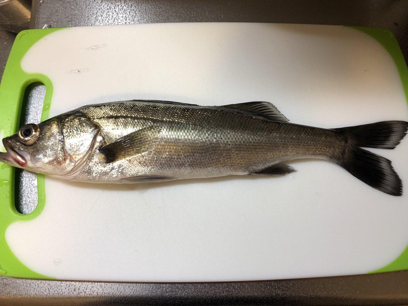 まささんの投稿画像,写っている魚はスズキ