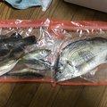こーへーさんの和歌山県紀の川市での釣果写真
