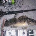 カチュアさんの北海道浦河郡での釣果写真