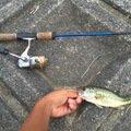 アズマックスさんの静岡県島田市での釣果写真
