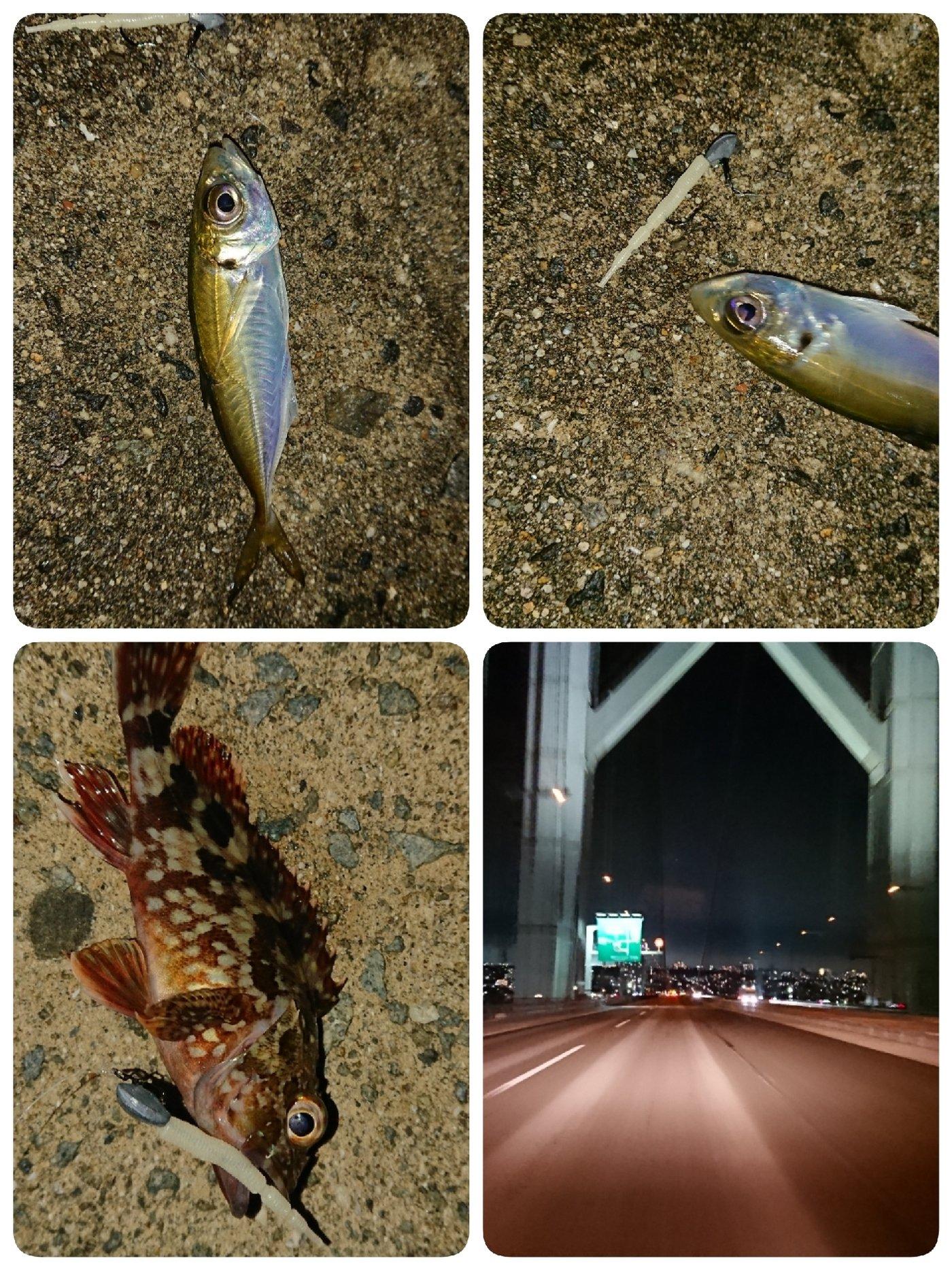 あっきーさんの投稿画像,写っている魚はアジ