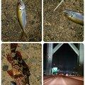 あっきーさんの兵庫県洲本市での釣果写真