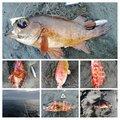 UROTSUTAさんの静岡県熱海市でのカサゴの釣果写真
