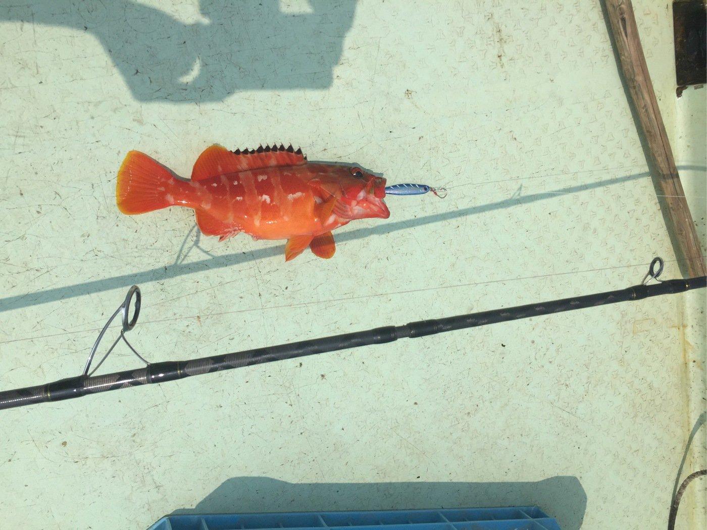 ユキヤさんの投稿画像,写っている魚はアカハタ
