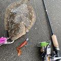 鮎川魚伸さんの三重県伊勢市での釣果写真