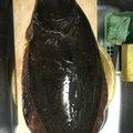 KGさんの千葉県富津市でのヒラメの釣果写真