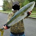 アイアンプレートさんの山口県防府市での釣果写真