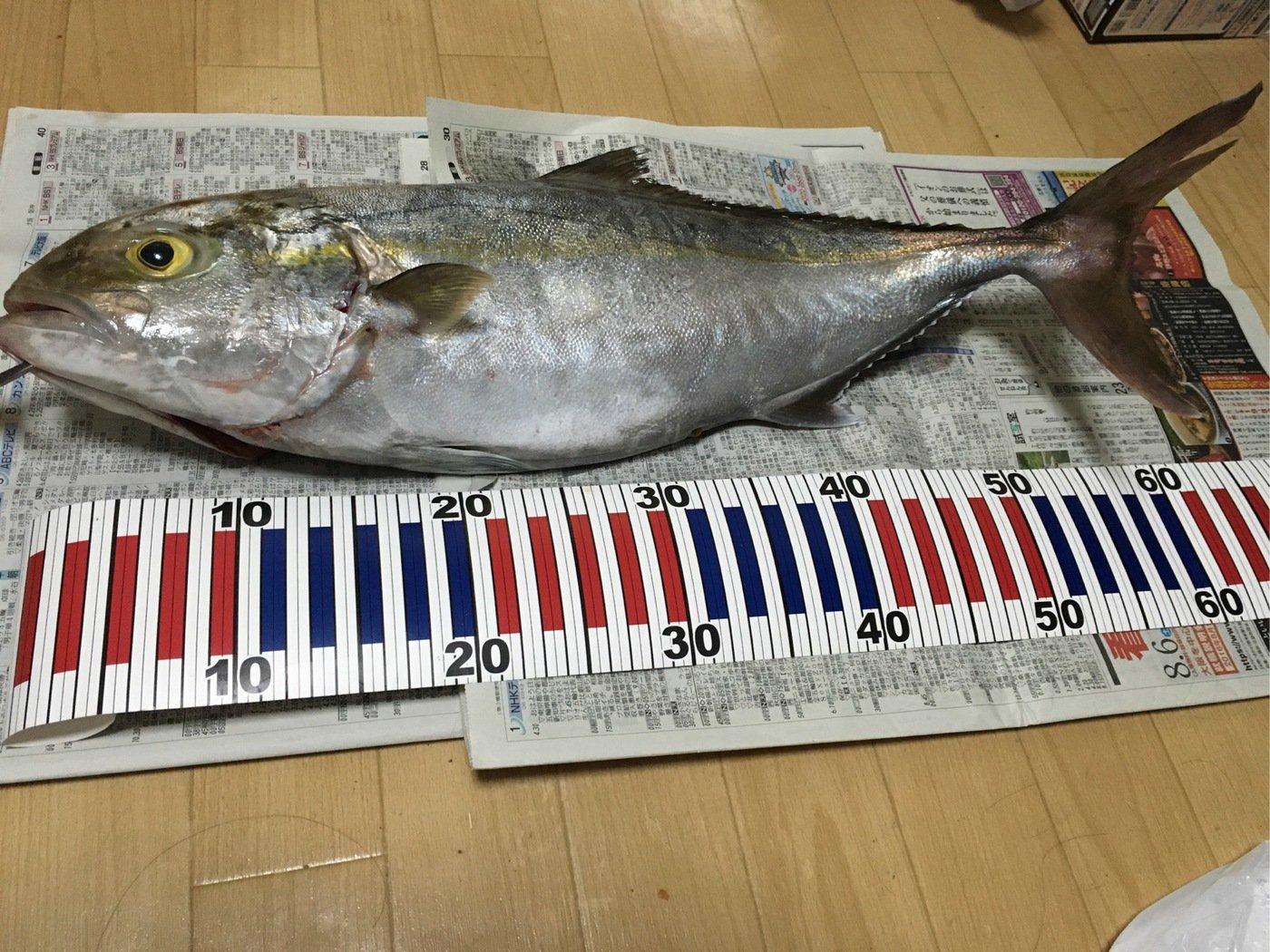 ゆうさんの投稿画像,写っている魚はカンパチ