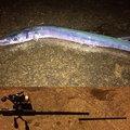 シタローさんの沖縄県宮古島市での釣果写真