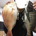 タクヤさんの神奈川県逗子市での釣果写真