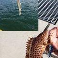 hirop🔧onさんの静岡県静岡市でのオオモンハタの釣果写真