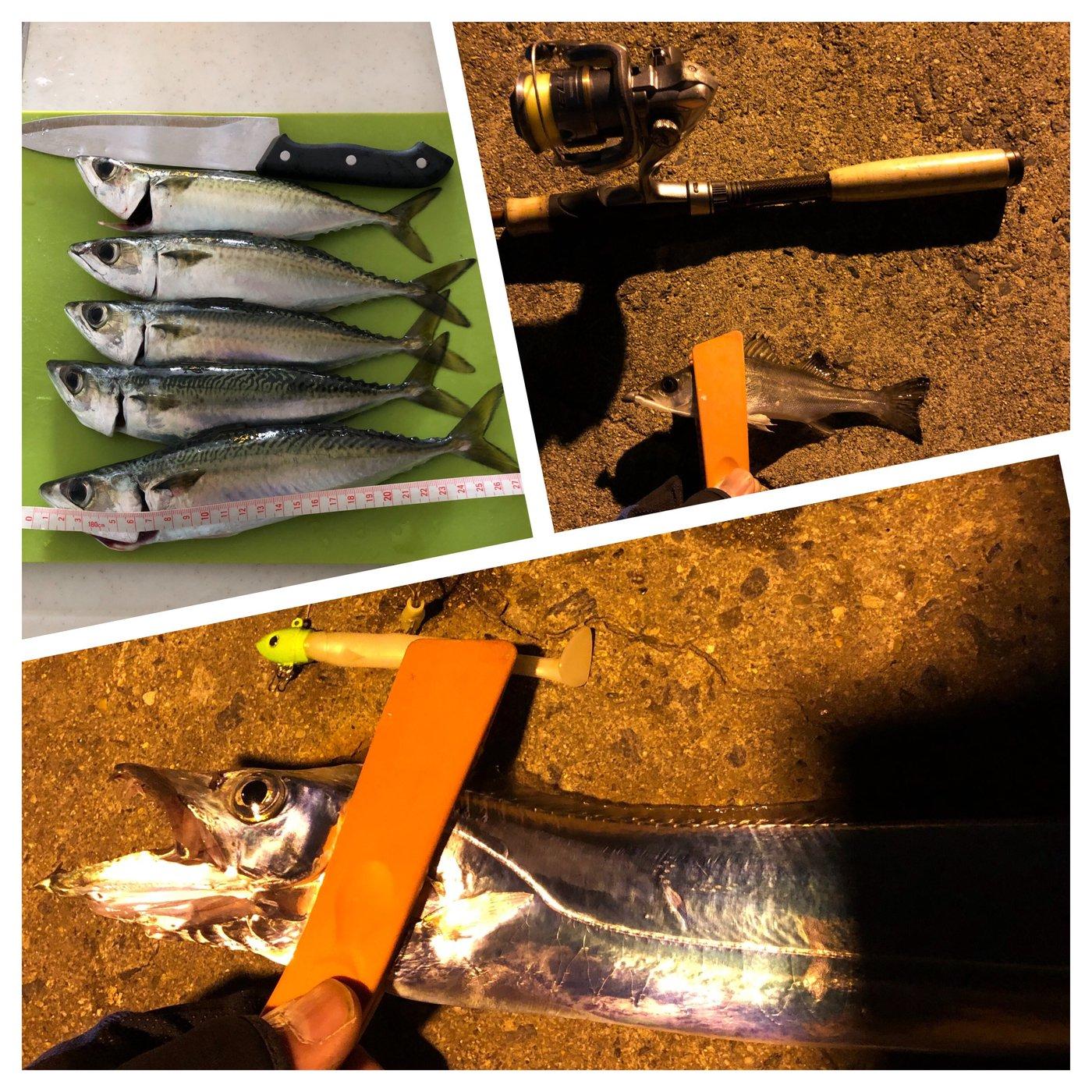ussiさんの投稿画像,写っている魚はタチウオ,マサバ,スズキ