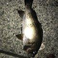 フルフルさんの熊本県水俣市での釣果写真