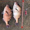 ポリンキーさんの福井県三方上中郡での釣果写真