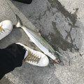 cocoさんの大阪府貝塚市でのサワラの釣果写真