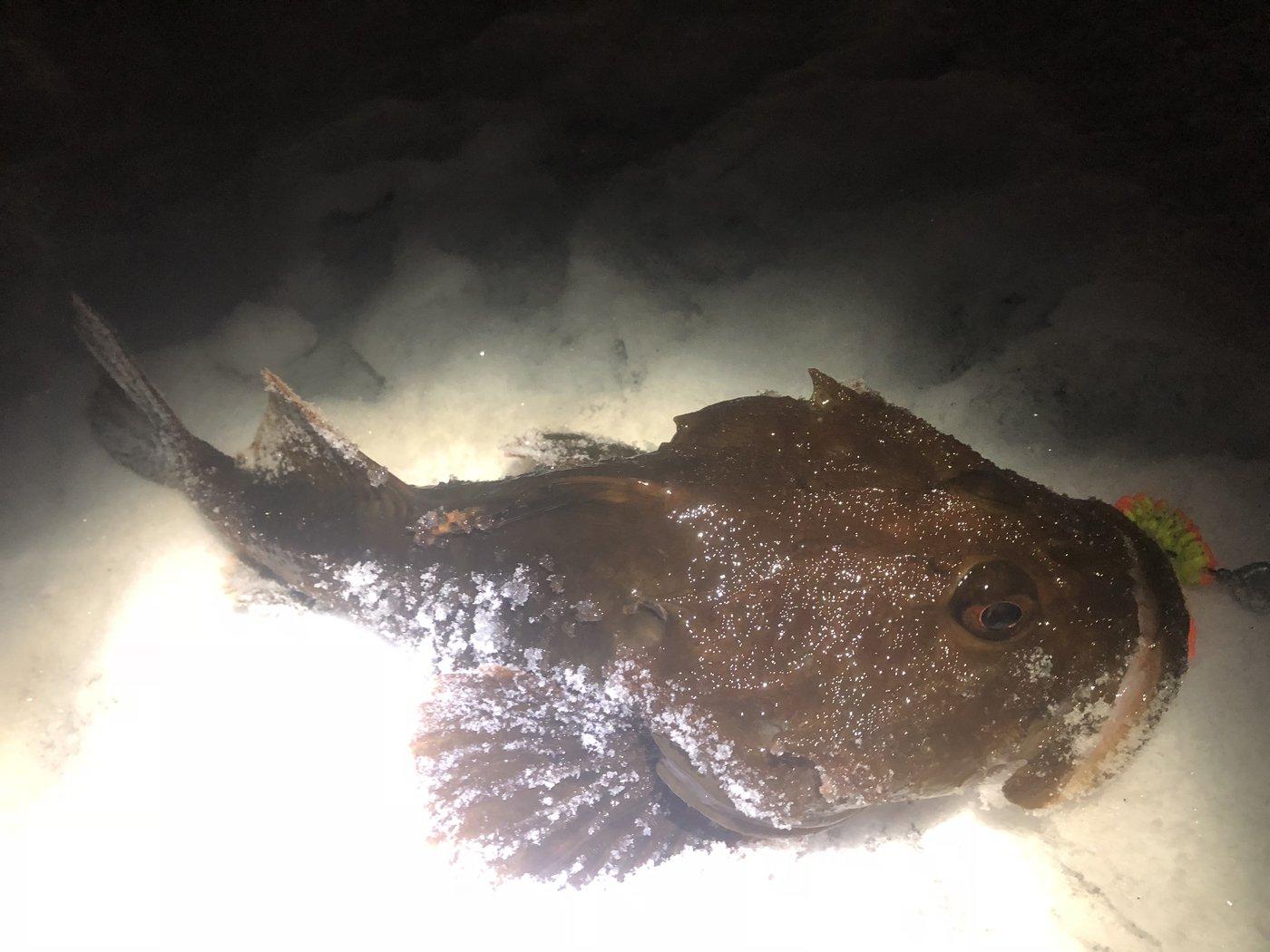 シーアツさんの投稿画像,写っている魚はカジカ