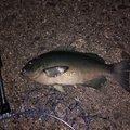 kiyoさんの高知県安芸市での釣果写真