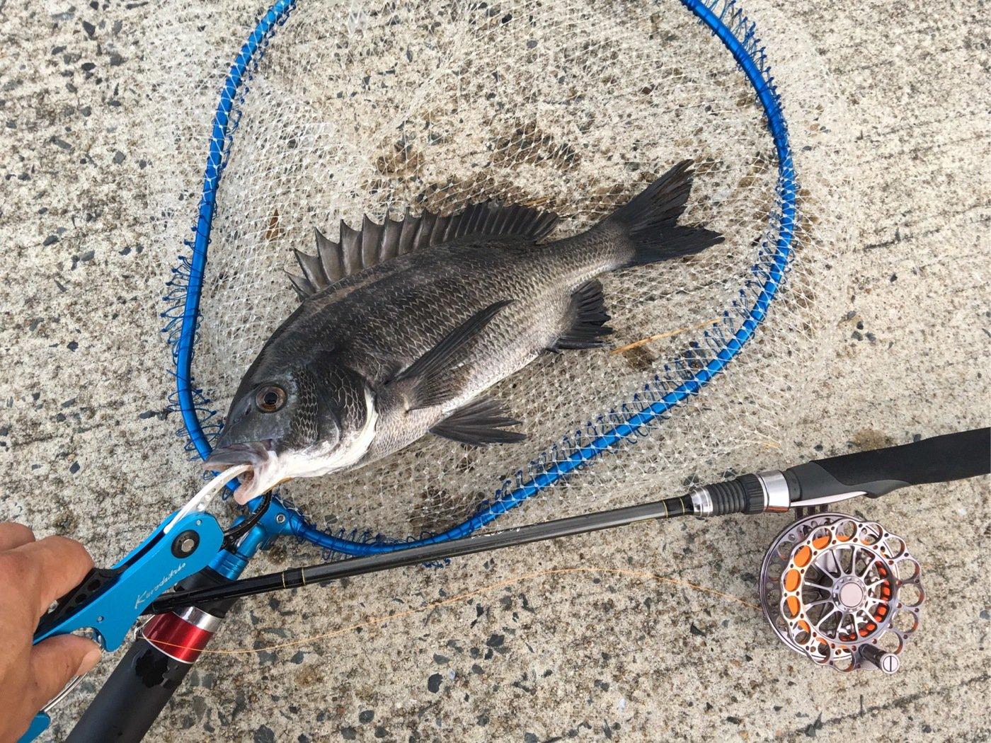 よんすさんの投稿画像,写っている魚は