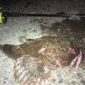 ユダヤさんの北海道函館市での釣果写真