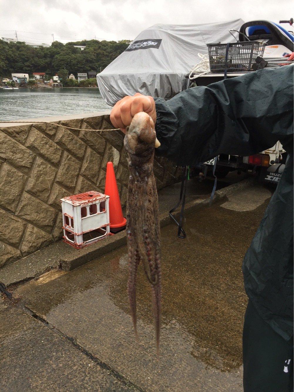 S,mukanoさんの投稿画像,写っている魚はマダコ