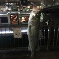 Yohei Hosokawaさんの東京都荒川区での釣果写真