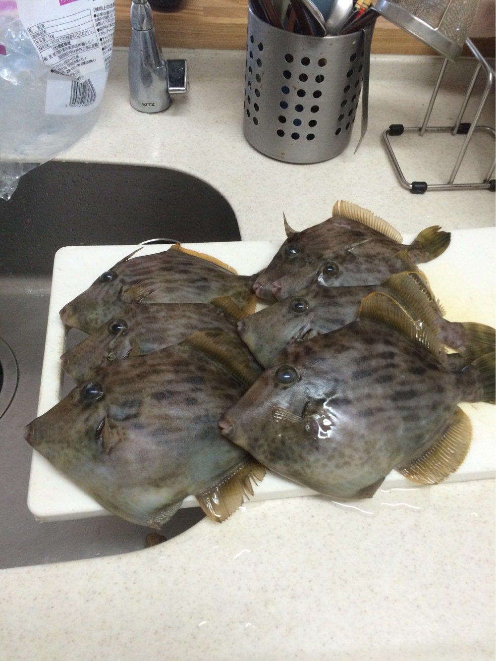 alisu38さんの投稿画像,写っている魚はカワハギ