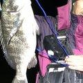 azeekさんの石川県加賀市での釣果写真